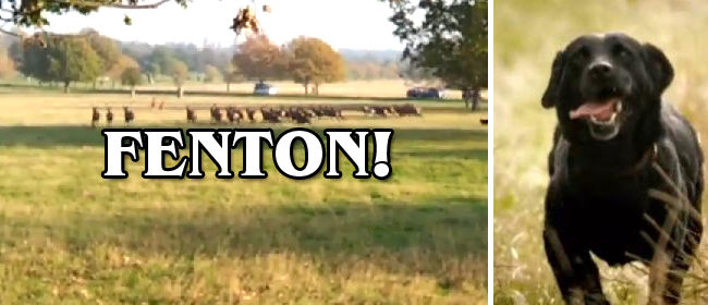 Fenton-Viral-Video